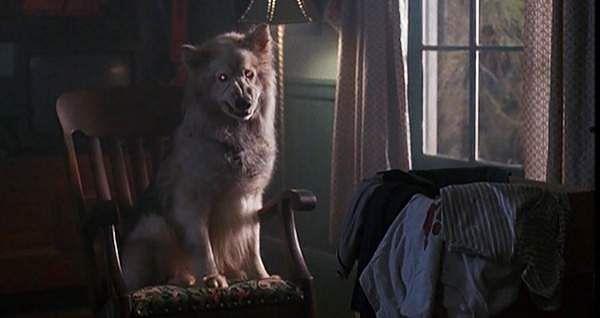 Cujo Book Dog Breed